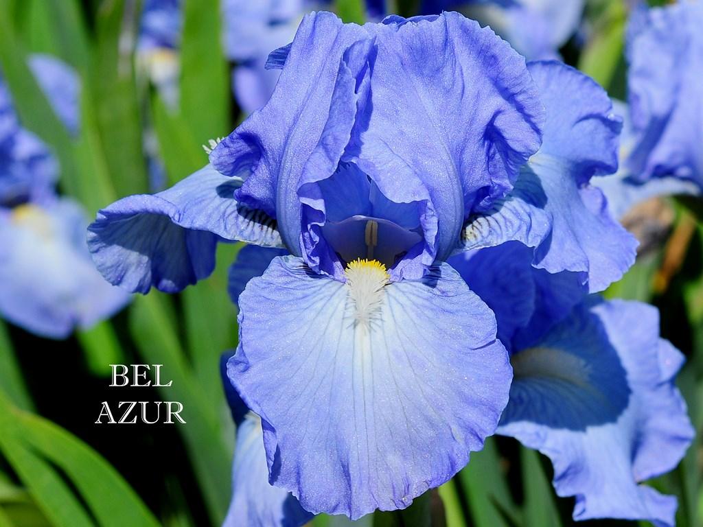 Le jardin d 39 iris bubry 56 nos cr ations for Aubade jardin d iris